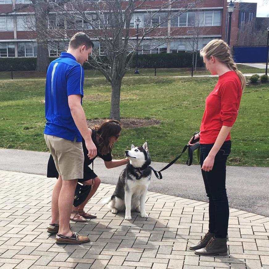 Holly Korona '13 (ED) '14 MA pets Jonathan XIV the husky