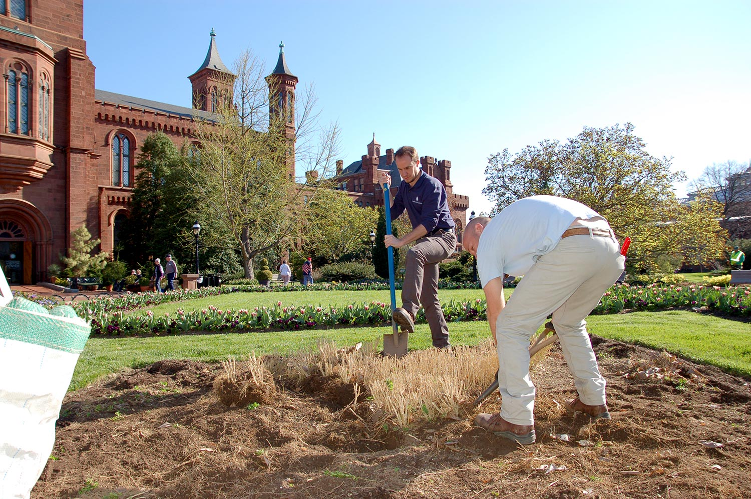 James works with his staff to replace boxwood fleurs-de-lis, a decorative element of the formal parterre behind the Smithsonian Castle.