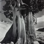 Image in black and white of tree trunk