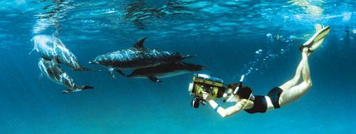 Kathleen Dudzinski underwater with dolphins