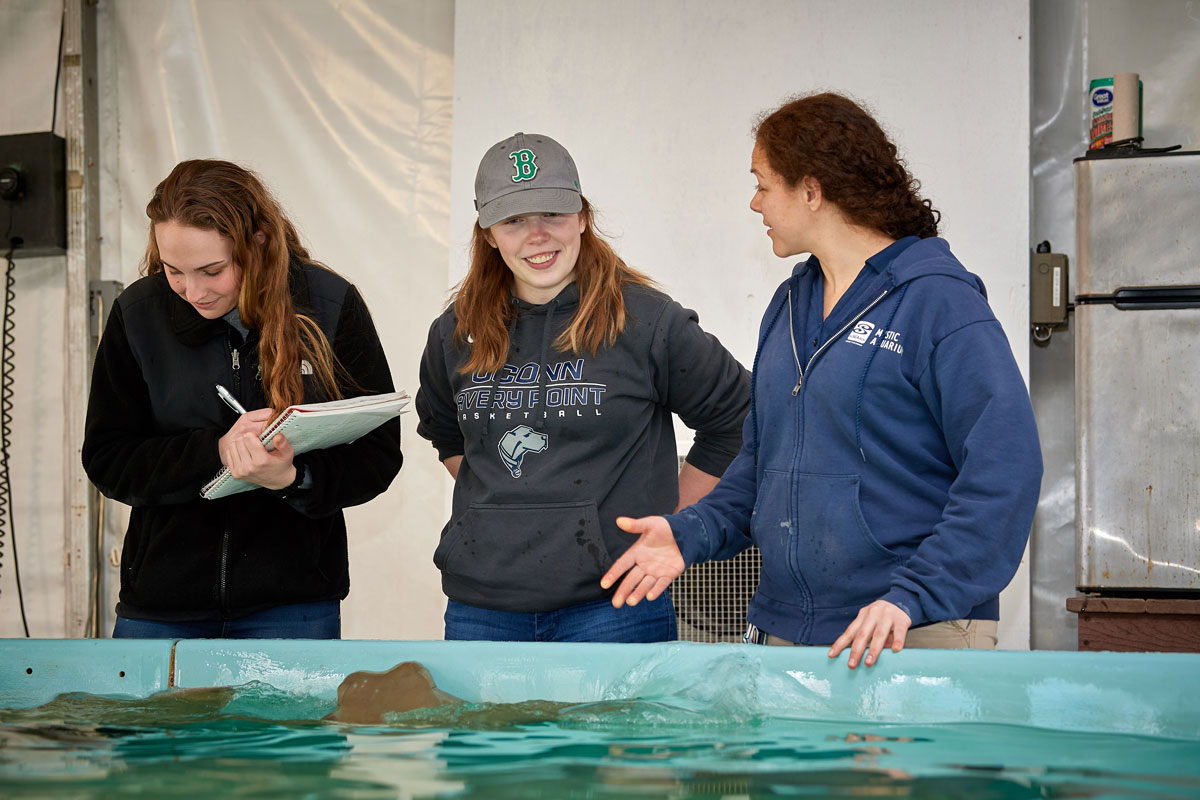 Avery Point students studying at Mystic Aquarium over the sting ray tank