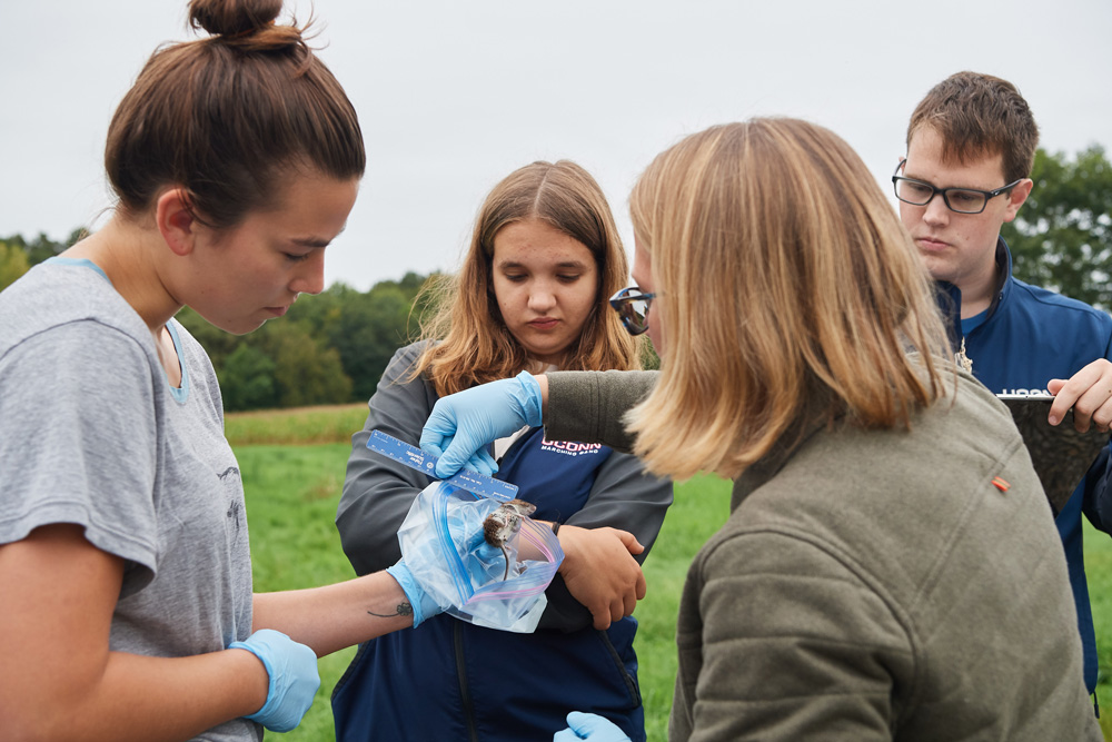 Students in Rittenhouse's wildlife techniques class learn to trap, measure, sample, and release mice and voles in the fields and forest near Horsebarn Hill.