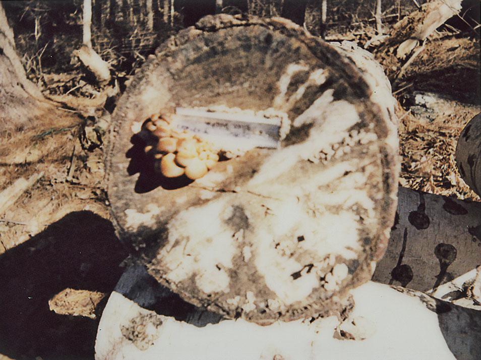 a fungi on a log