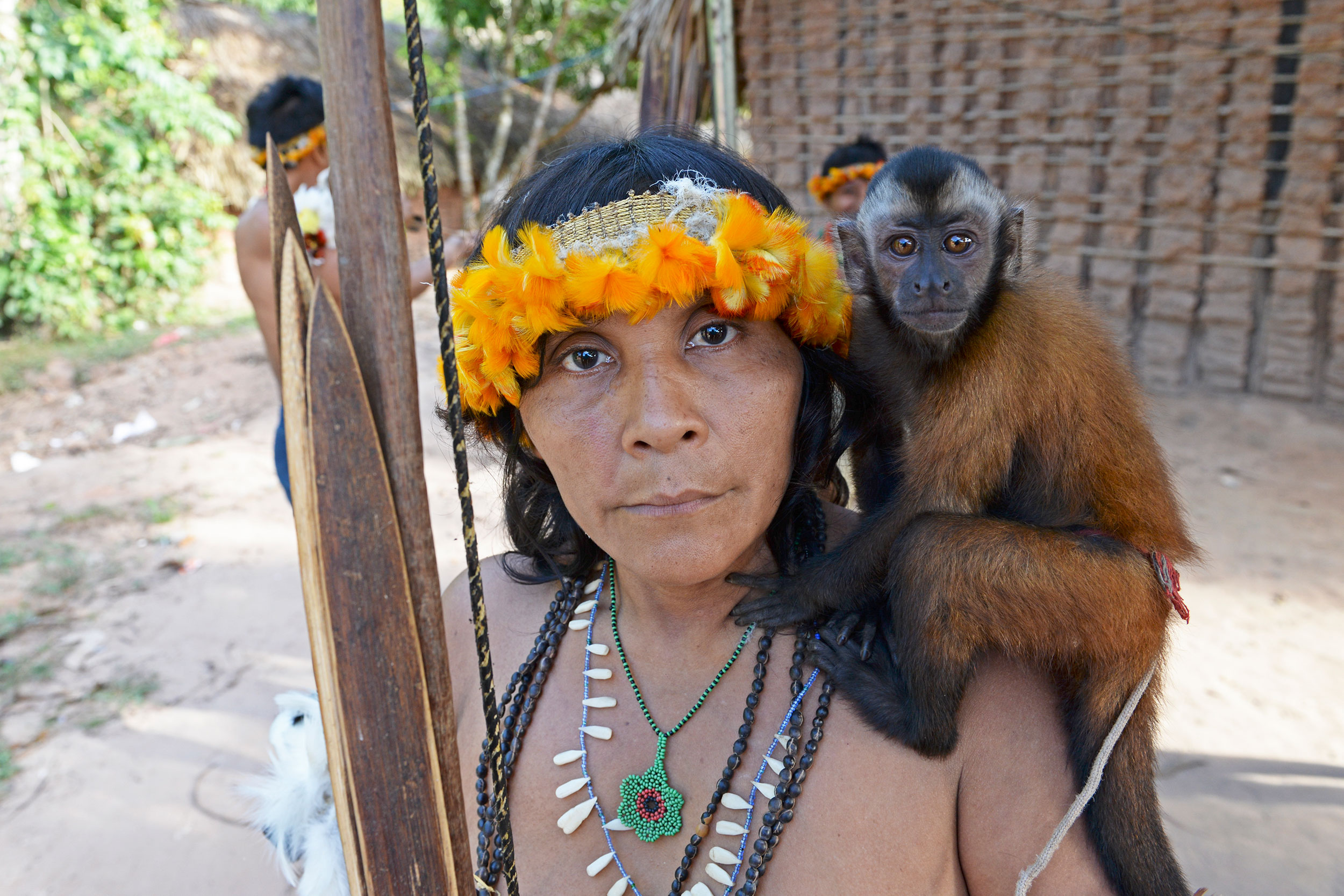 Awá woman, in a toucan feather headdress, holds a hunting bow and arrows while a pet monkey sits on her opposite shoulder in Carú Indigenous Territory, Brazil, 2017.