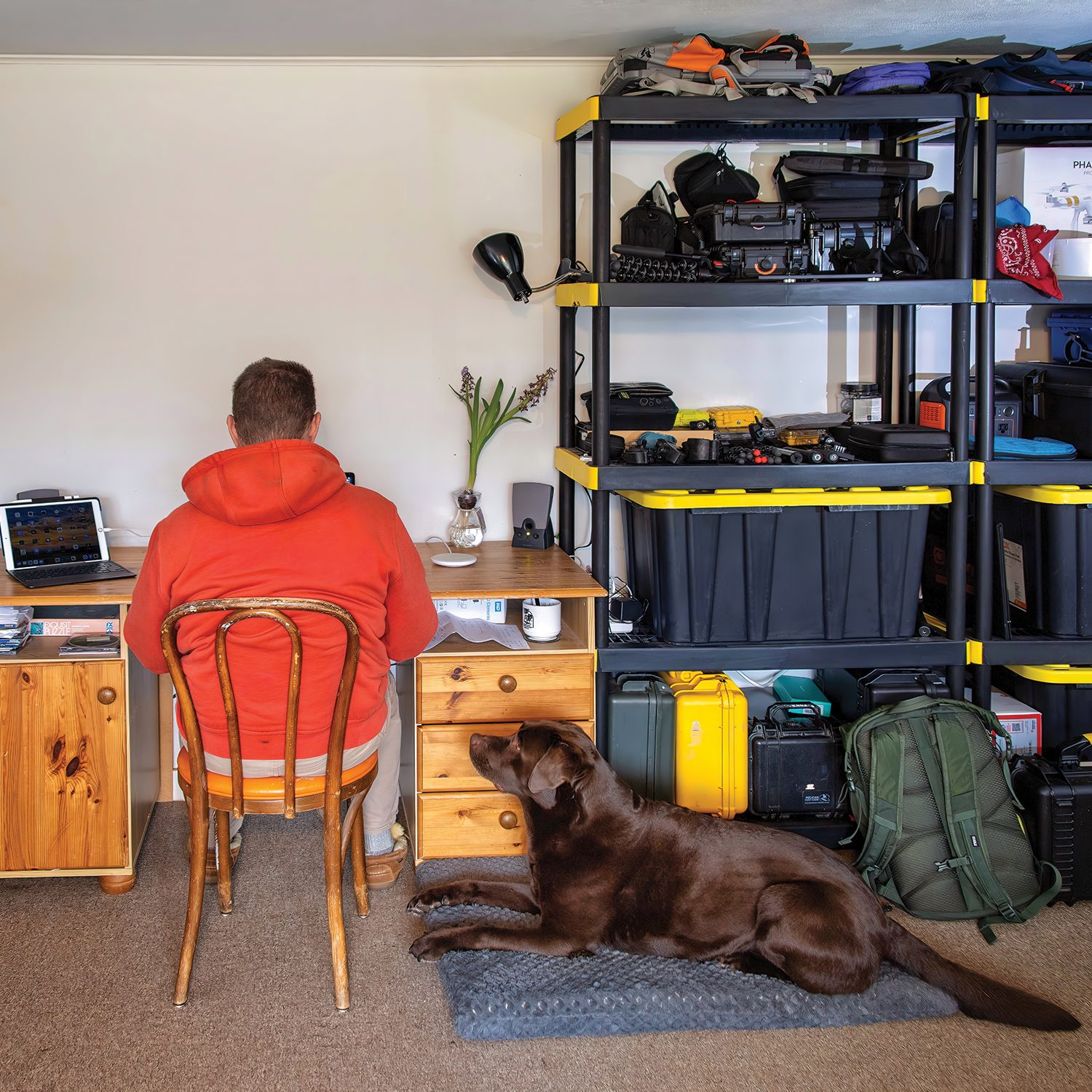 Levin in his makeshift home office with his chocolate Lab, Acadia