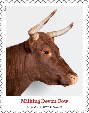 Heritage Breed Milking Devon Cow USA Stamp