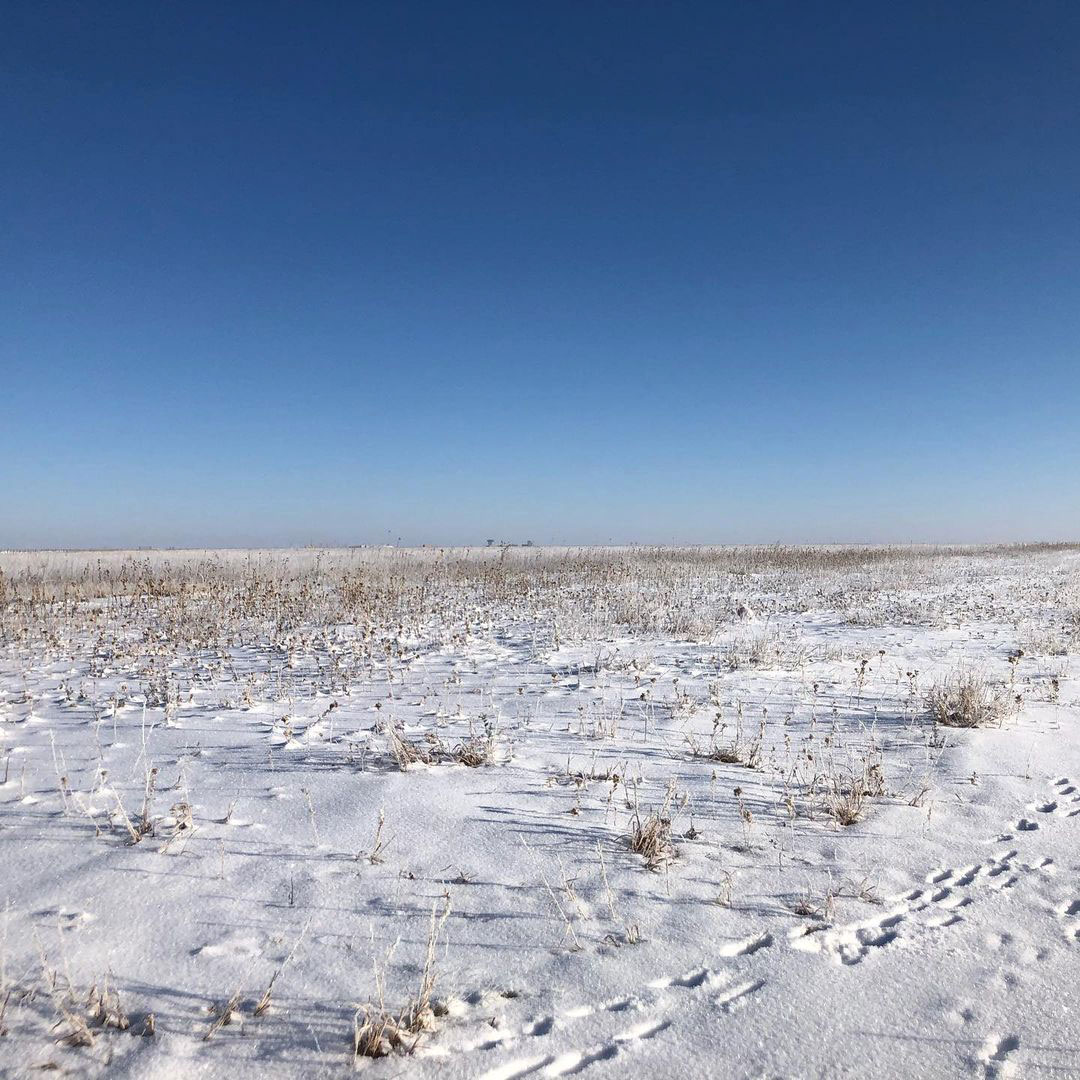 a field dusted in snow