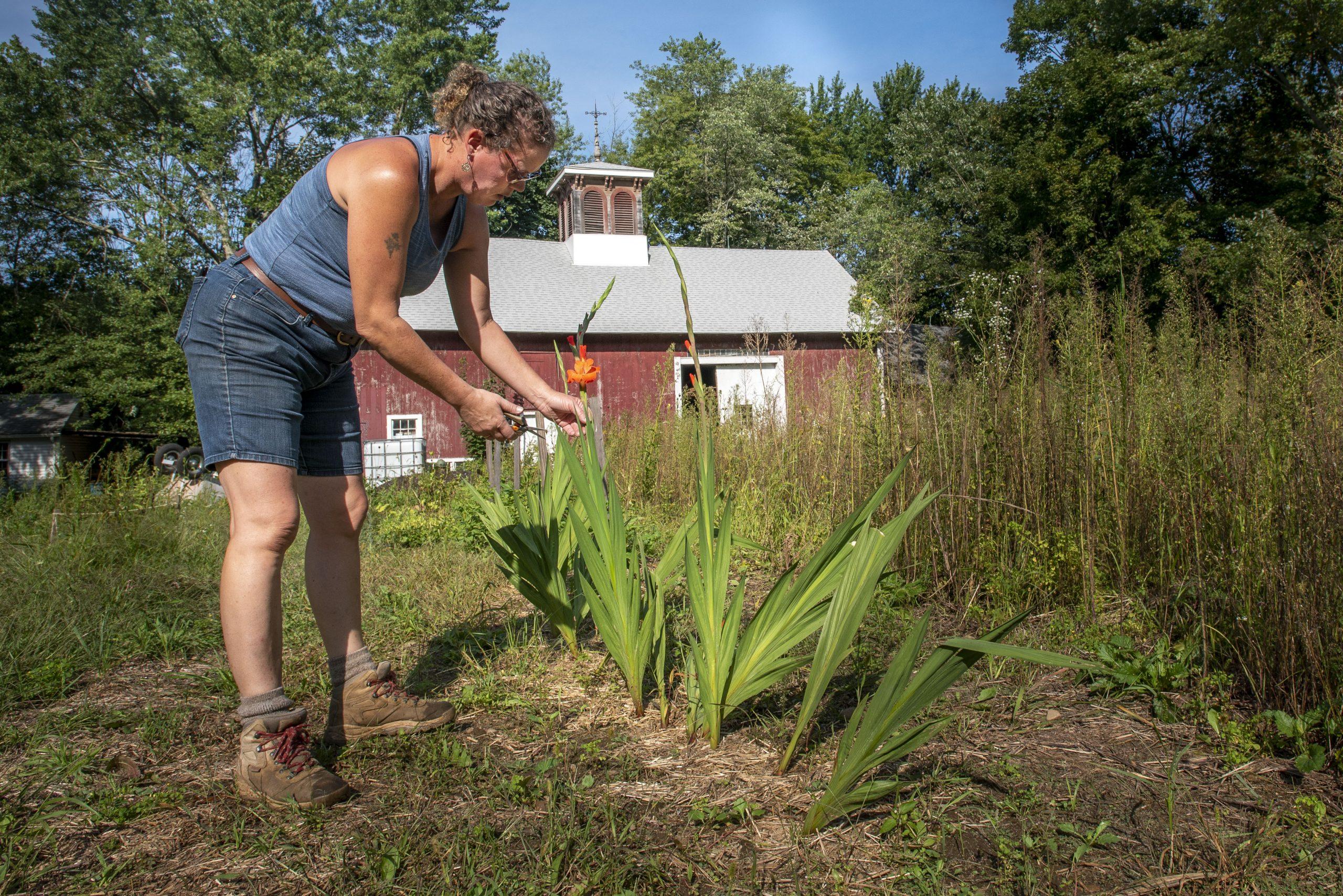 Lauren Haff harvesting flowers in her garden on Sept. 13, 2021.